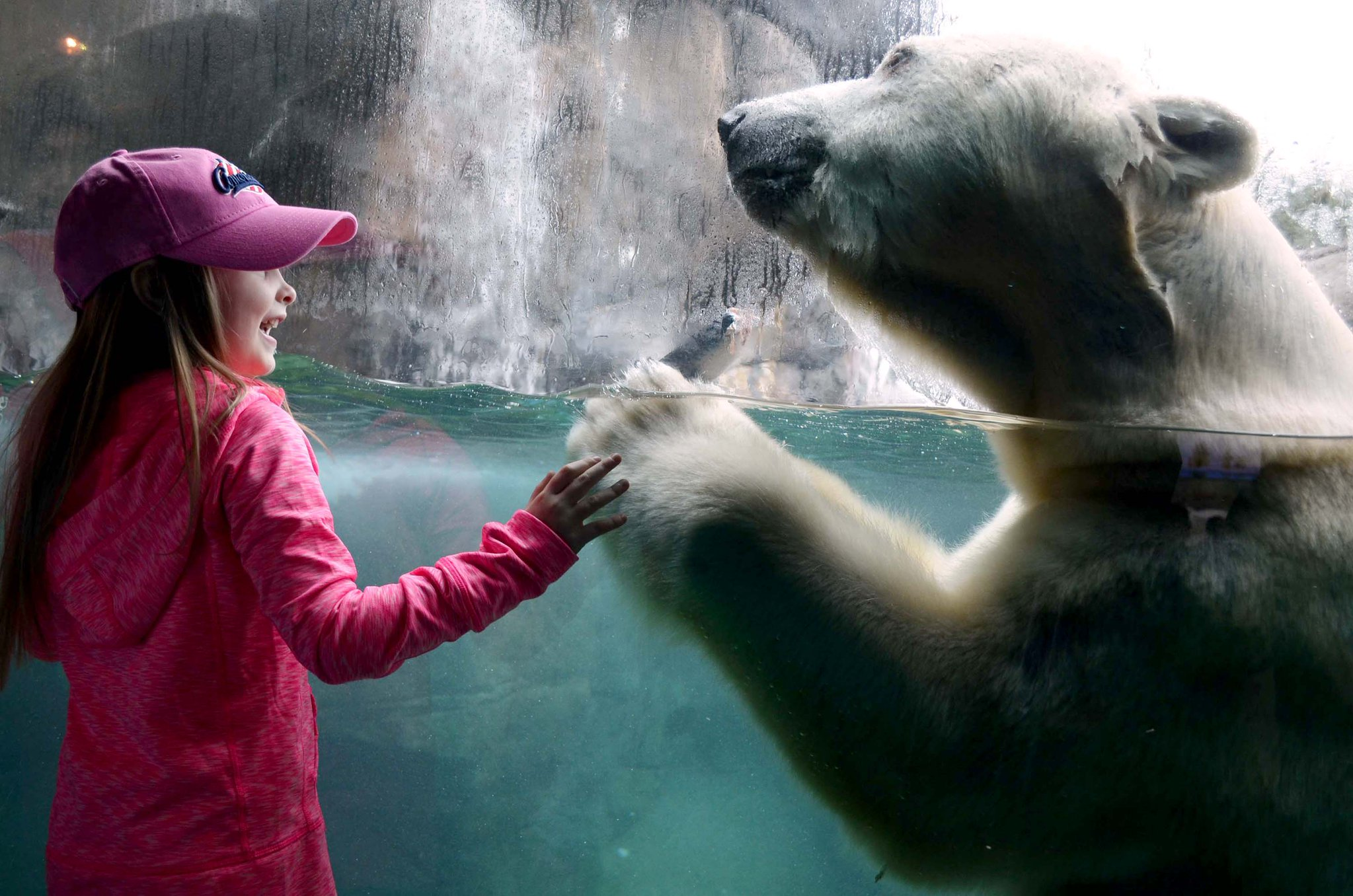seneca park zoo aurora polar bear_1520432453754.jpg.jpg