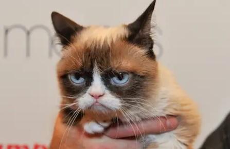 Grumpy Cat passes away on May 14_1558087480431.jpg.jpg