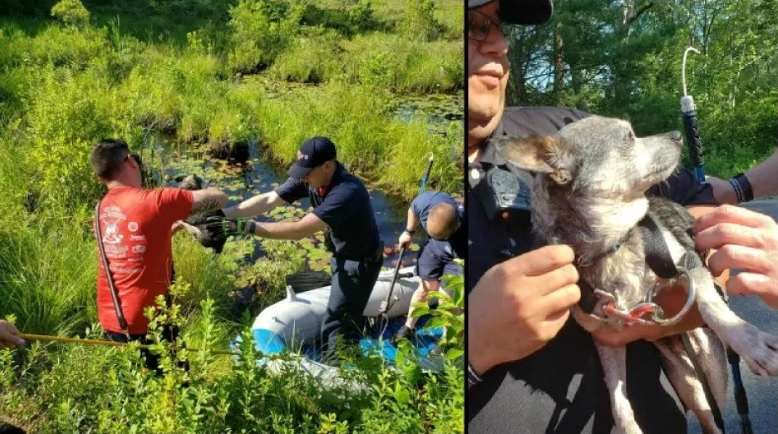 Rhode Island firefighters rescue dog spooked by fireworks