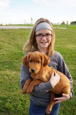 Fashionable Sale Australia Irish Setter Gen Retriever Mix Australia