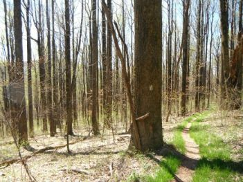 Shenandoah's Appalachian Trail