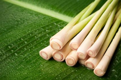 essential oil lemongrass 2