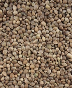 Hemp Seed Oil Seeds