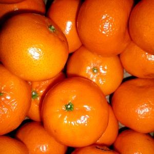 Essential Oil Mandarin
