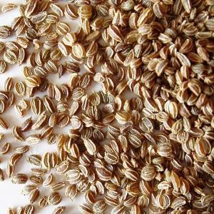 essential oil celery seed