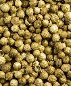 essential oil coriander 1