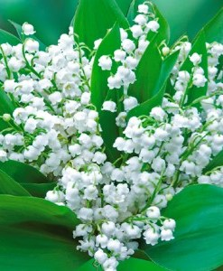 essential oil muguet
