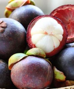 Kokum Butter Fruit 1