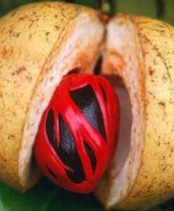 Kombo fruit