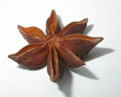 Essential Oil Star Anise 2