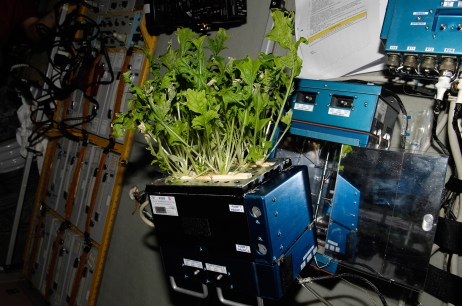 It may be a while before NASA puts out a call for farmers to produce space crops, but that's not to say that astronauts may not one day be growing a few of their own food stuffs aboard the International Space Station. Photo: NASA