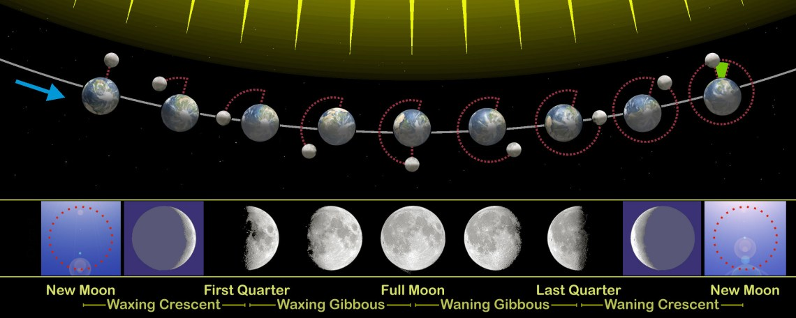 The relation of the phases of the Moon with its revolution around Earth. The sizes of Earth and Moon, and their distance you see here are far from real. On this image the following are also depicted: the synchronous rotation of the Moon, the motion of the Earth around the common center of mass, the difference between the sidereal and synodical month (green mark), the Earth's axial tilt.  Credit: Orion 8 via wikipedia.com