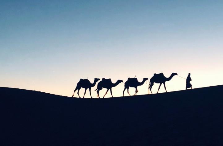 small camel caravan