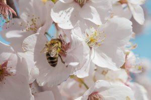 bee in a flower