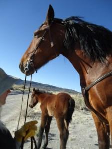 Baby Mustang. Photo: Ivana Crone