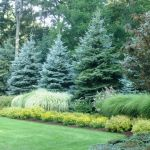 Awesome Fence With Evergreen Plants Landscaping Ideas 105