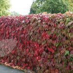 Awesome Fence With Evergreen Plants Landscaping Ideas 47