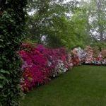 Awesome Fence With Evergreen Plants Landscaping Ideas 6