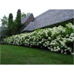 Awesome Fence With Evergreen Plants Landscaping Ideas 62