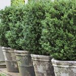 Awesome Fence With Evergreen Plants Landscaping Ideas 66