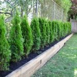 Awesome Fence With Evergreen Plants Landscaping Ideas 75