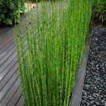 Awesome Fence With Evergreen Plants Landscaping Ideas 76