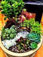 Beauty Succulents for Houseplant Indoor Decorations 34 1