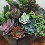 Beauty Succulents for Houseplant Indoor Decorations 8 1