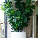 Beautiful Home Plant for Indoor Decorations 19