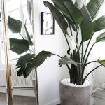 Beautiful Home Plant for Indoor Decorations 24
