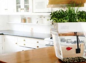 DIY Indoor Aquaponics Fish Tank
