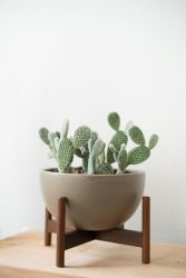 Cool Plant Stand Design Ideas for Indoor Houseplant 95