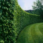 Stunning Privacy Fence Line Landscaping Ideas 3