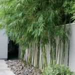 Stunning Privacy Fence Line Landscaping Ideas 49
