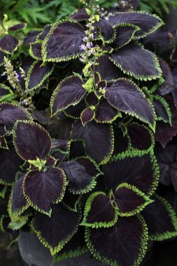 Spooky Plant and Flower Ideas to Make Perfect Goth Garden 33