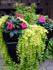 25 Simple Ideas to Make Cascading Garden Planter 14