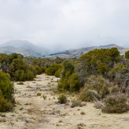 wilderness scientific reserve