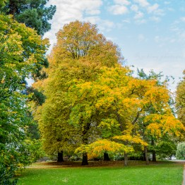 Sunburst, Botanic garden, Christchurch
