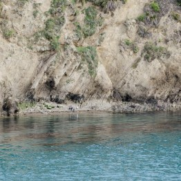 Cook strait with Spotted Shag