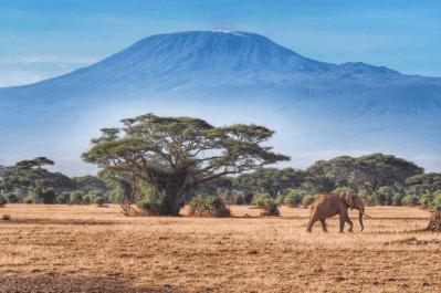 Kilimanjaro Tour 1 (1)