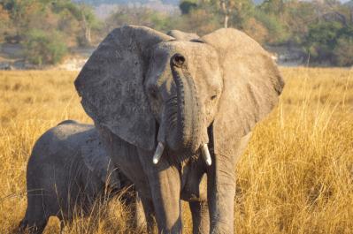 Malawi, Zambia & Botswana Tour 22