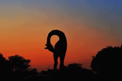 Malawi, Zambia & Botswana Tour 31