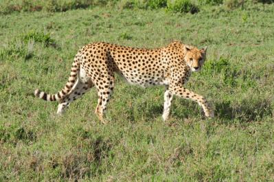 Tanzania & Zanzibar Tour 37