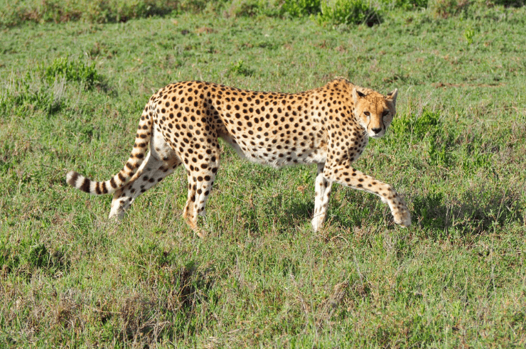 Kenya & Tanzania Group Adventure for Solo Travellers - Rock My Adventure