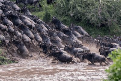 Kenya & Tanzania Photography Tour (2)