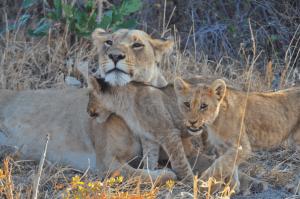 Savuti Botswana Group Tour - Rock My Adventure