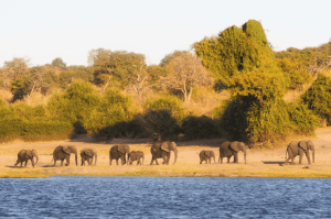 Chobe National Park Botswana Group Tour - Rock My Adventure
