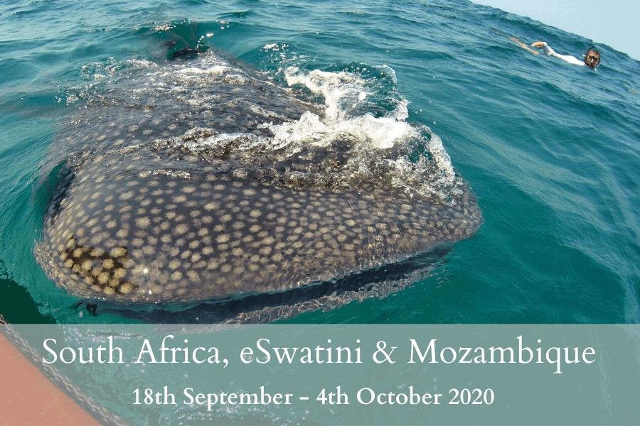 South Africa, eSwatini & Mozambique Tour