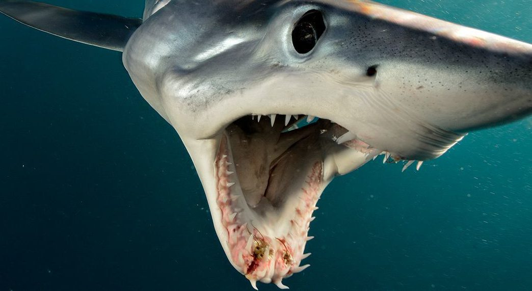 Fooled By Fake Shark Attack… – ROCK 94 3
