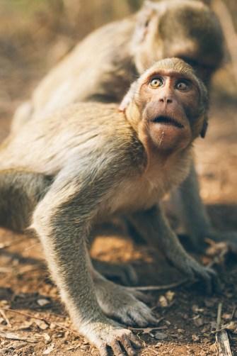 Sur la route, on croise des singes